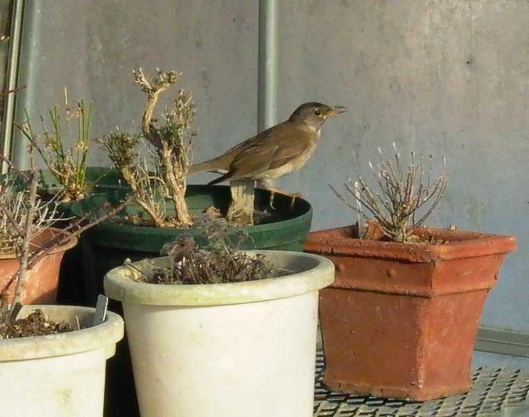 bird090127