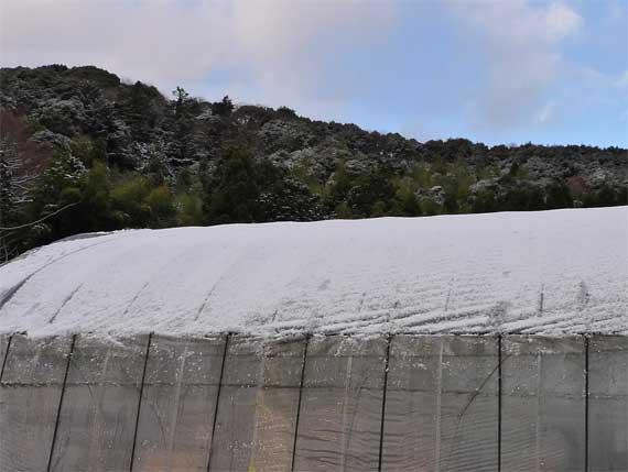 雪とビニールハウス
