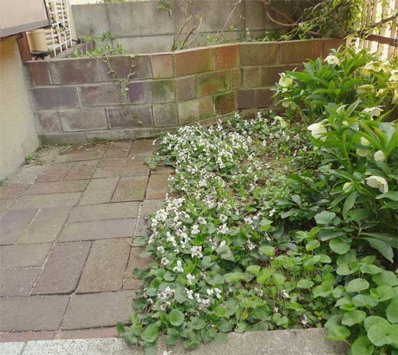 奥の花壇が元いた場所。よほど居心地が悪かったのか。