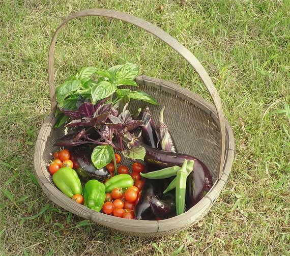 ザルと野菜
