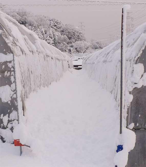 ハウスの間の雪