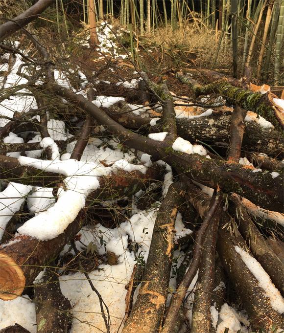 積み重なった木