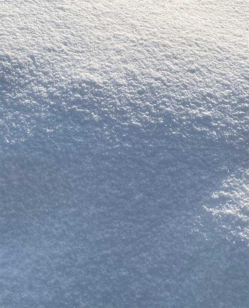 雪に埋まったラベンダー