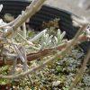 寒中の芽(3)