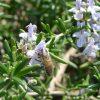ミツバチの春